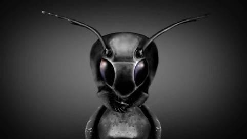 """Дэвид Уилкок. Космическое Раскрытие: """"Коллеги с других планет"""". Интервью с Эмери Смитом 421_5"""