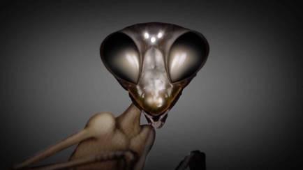 """Дэвид Уилкок. Космическое Раскрытие: """"Коллеги с других планет"""". Интервью с Эмери Смитом 421_8"""
