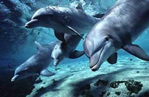 """""""Связь с дельфинами"""". Интервью Дэвида Уилкока с Питом Питерсоном 465_2"""