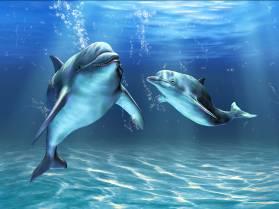 """""""Связь с дельфинами"""". Интервью Дэвида Уилкока с Питом Питерсоном 465_5"""