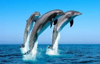 """""""Связь с дельфинами"""". Интервью Дэвида Уилкока с Питом Питерсоном 465_6"""