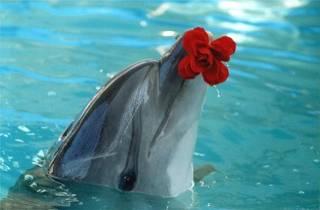 """""""Связь с дельфинами"""". Интервью Дэвида Уилкока с Питом Питерсоном 465_7"""